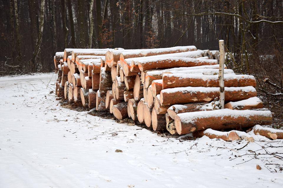 2017.11.27.drewno